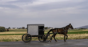 I'm Taking an Amish Buggy to the Land of My Dreams